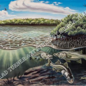 Watermarked version of The Chokoloskee Snook painting